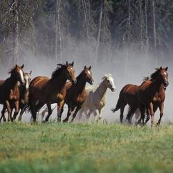 caballos_corriendo